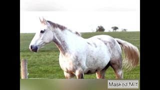 Horny Milf takes giant horse cock dildo compilation | Masked Milf